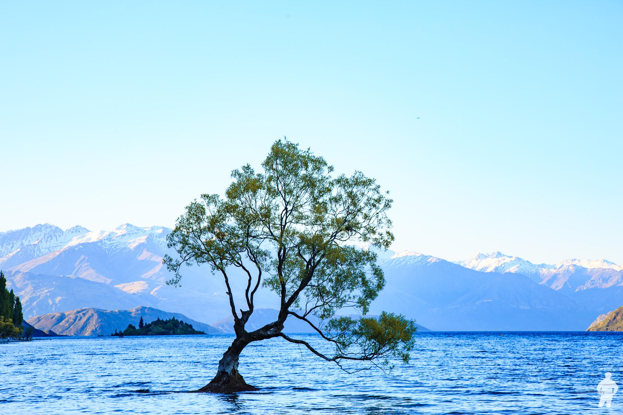 NZ_00119