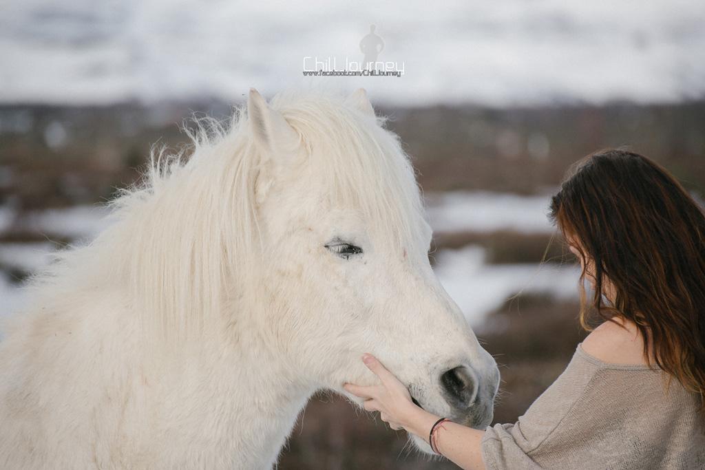 Iceland_MG_3582